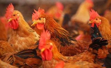 合肥市发布活禽交易休市制度明年2月1日起执行