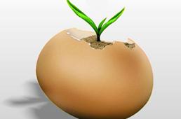 泰国鲜切榴莲技术 解决出口保鲜期和质量难题
