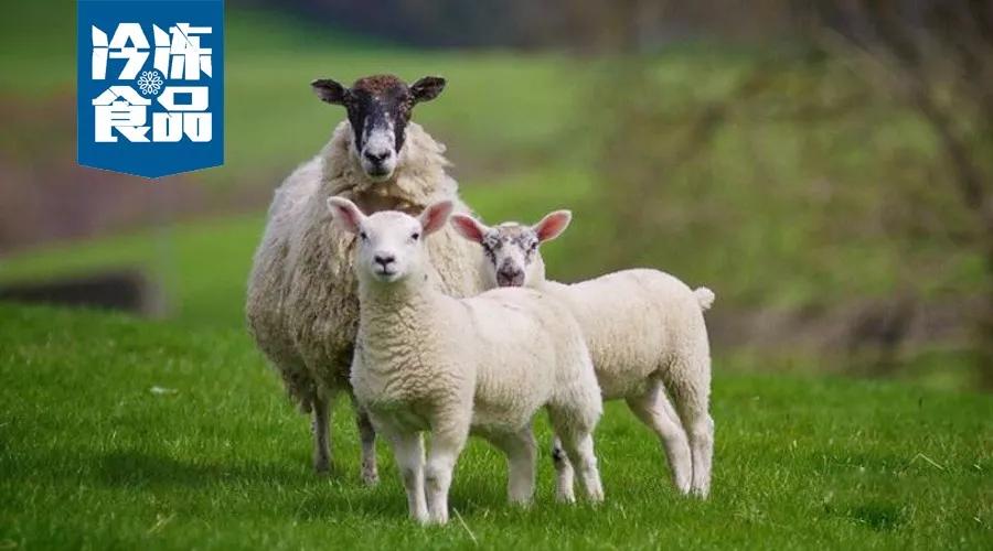 大咖年终讲 | 蒙羊总裁曹旭升,肉羊产业升级,未来将有多寡头出现!