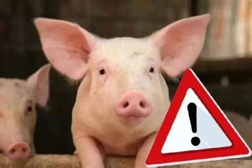 涨势惊人!猪肉批发价单月暴涨6830元/吨