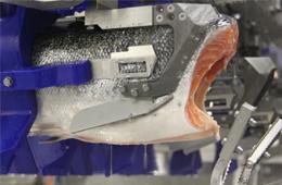 三文鱼、白肉鱼等水产品自动化加工升级加速!